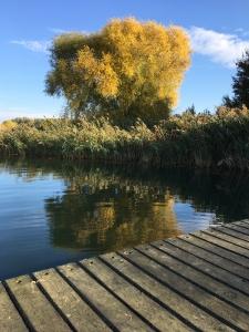 Lac d'Amance